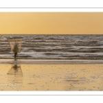 Pêcheurs de crevettes grises sur la plage de Ault.