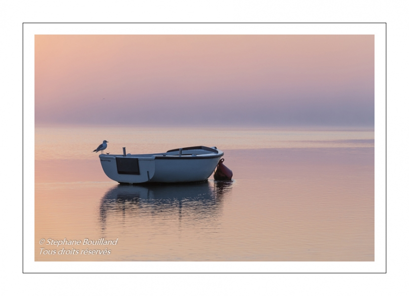 Goéland posé sur un barque dans le chenal de la Somme au petit matin.
