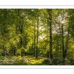 La forêt de Crécy dans la Somme en début d'automne