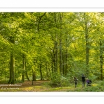 Promeneurs dans la forêt de Crécy dans la Somme en début d'automne