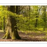 La forêt de Crécy