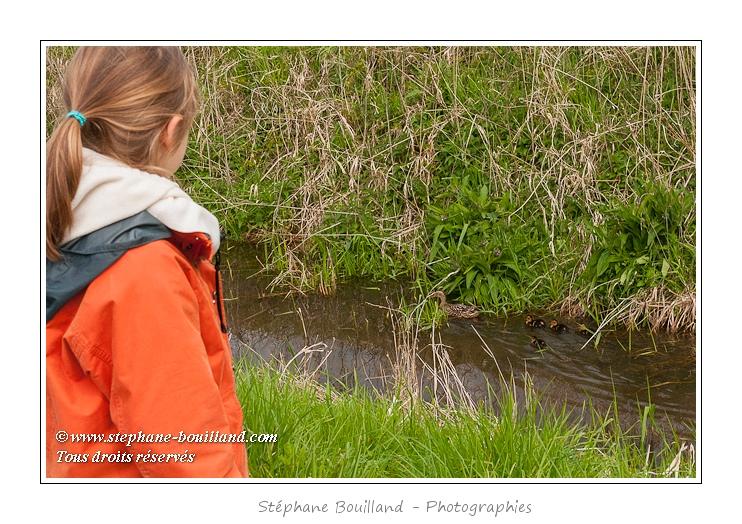 Noémie (enfant, fille, 8ans) observe une cane et ses canetons dans un fossé. Découverte de la réserve avifaune de Grand-Laviers dans le cadre du festival de l'oiseau. Réserve de chasse mise en place par les chasseurs dans les anciens bassins de  décantation de la sucrerie fermée en 2010. Les bassins ont été rachetés et remis en eau, des observatoires sont aménagés petit à petit pour le public. De nombreuses espèces d'oiseaux  fréquentent le site.  Saison : Printemps - Lieu : Grand-Laviers, Vallée de la Somme, Somme, Picardie, France.