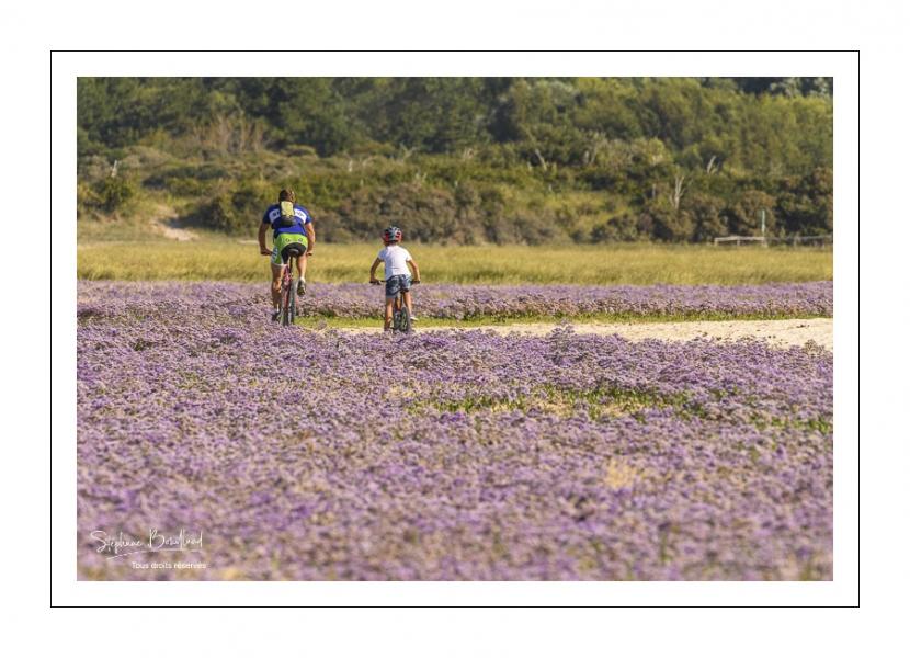 Promeneurs parmi les lilas de mer