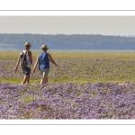 un couple de promeneurs traversent les lilas de mer