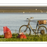 Pêcheur à pied cueillant de la salicorne