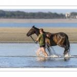 Eleveurs de chevaux promènent et entrainent leur monture