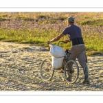 France, Somme (80), Baie de Somme, Le Crotoy, Plages de la Maye, Réserve naturelle de la Baie de Somme,Pêcheur à pied ramenant des sacs de salicorne sur un vélo sans selle // France, Somme (80), Baie de Somme, Le Crotoy, Plages de la Maye, Baie de Somme Nature Reserve,Fisherman  bringing back bags of glasswort on a bike without saddle