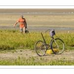 Pêcheur à pied occupé à la cueillette de la salicorne