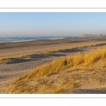 Les dunes du Marquenterre au sud de la baie d'Authie