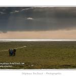 Alors que les plages de la Maye sont sous le soleil, un orage s'abat sur le Crotoy. Durant le Festival de l'oiseau, les groupes de festivaliers sillonnent la Baie lors de multiples sorties nature. Saison : Printemps - Lieu : Plages de la Maye, Baie de Somme, Le Crotoy, Somme, Picardie