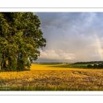 France, Somme (80), Nouvion-en-Ponthieu, Arc-en-ciel sur la forête de Crécy et sur un champ d'escourgeons // France, Somme (80), Nouvion-en-Ponthieu, Rainbow on the Crécy forest and on a field of escourgeons