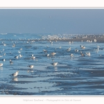 Oiseaux_Quend_22_01_2017_002-border
