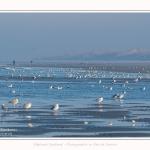 Oiseaux_Quend_22_01_2017_003-border