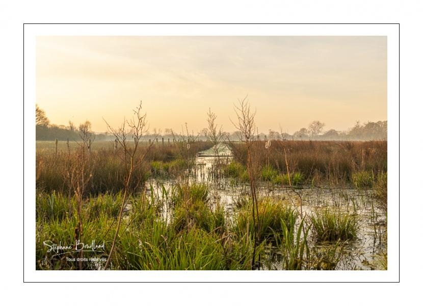 Les marais de la basse vallée de la Somme près de Port-le-Grand
