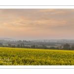 Champ de colza près des marais de la Somme