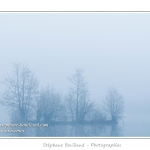 Les marais de la Somme dans le brouillard. La brume épaisse transforme les arbres en silhouette fantômatique. - Saison : Printemps - Lieu : Longpré-les-Corps-Saints, Vallée de la Somme, Somme, Picardie, France