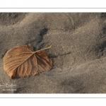 Feuille morte sur le sable