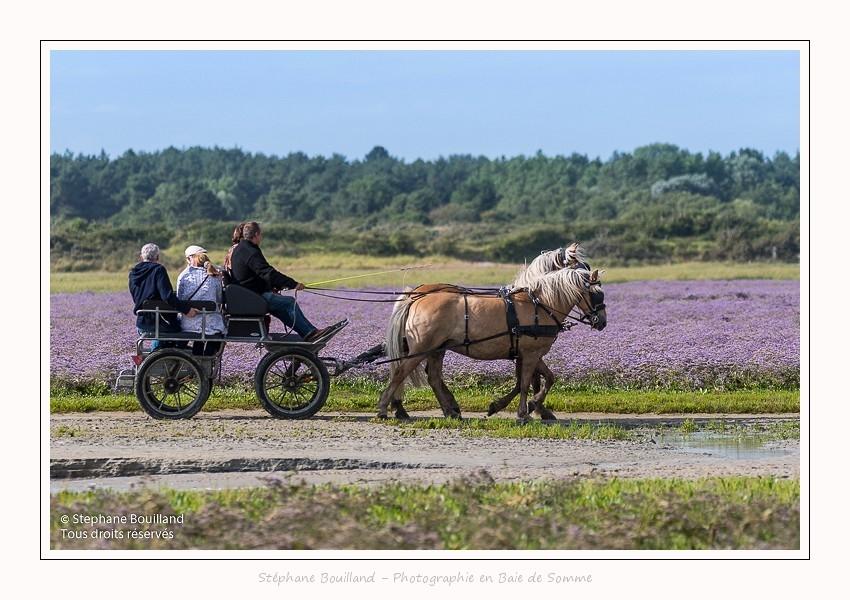 chevaux_Plage_Maye_04_08_2016_003-border