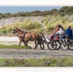 chevaux_Plage_Maye_04_08_2016_001-border