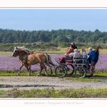 chevaux_Plage_Maye_04_08_2016_002-border