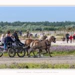 chevaux_Plage_Maye_04_08_2016_004-border