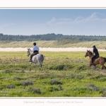 chevaux_Plage_Maye_04_08_2016_005-border