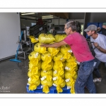 Les mytiliculteurs récoltent les moules de bouchots