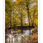 La mare du faux soleil en forêt de Crécy à l'automne