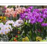 Orchidées - Journées des Plantes de Chantilly