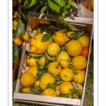 Caisse de citrons - Journées des Plantes de Chantilly