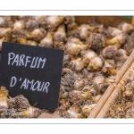 oignons - Journées des Plantes de Chantilly