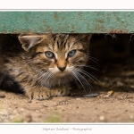 Chats_Osnes_09_05_2015_003-border