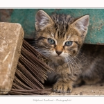 Chats_Osnes_09_05_2015_006-border
