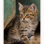 Chats_Osnes_09_05_2015_015-border