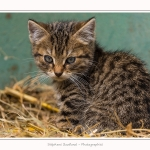 Chats_Osnes_09_05_2015_016-border