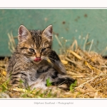 Chats_Osnes_09_05_2015_017-border