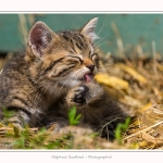 Chats_Osnes_09_05_2015_018-border