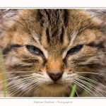 Chats_Osnes_09_05_2015_026-border