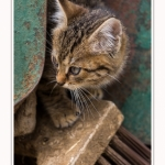 Chats_Osnes_09_05_2015_028-border