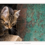 Chats_Osnes_09_05_2015_029-border