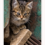 Chats_Osnes_09_05_2015_030-border