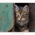 Chats_Osnes_09_05_2015_034-border