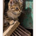 Chats_Osnes_09_05_2015_036-border