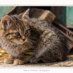 Chats_Osnes_09_05_2015_037-border