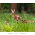 Saison : Printemps - Lieu : Forêt de Crécy, Crécy-en-Ponthieu, Somme, Picardie, France