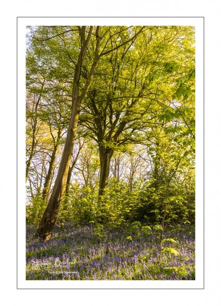 Le bois de Cise en fleurs