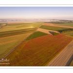 Les champs de coquelicots entre Saint-Valery-sur-Somme et Pendé