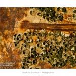 Détail de la coque de l'épave d'un chalutier dans le cimetière à bateau au Crotoy (Baie de Somme) Saison : hiver - Lieu : Le Crotoy, Baie de Somme, Somme, Picardie, France.