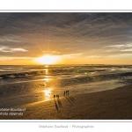 saison : été - Lieu :  Le Crotoy, Baie de Somme, Réserve naturelle, Somme, Picardie, France