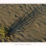 LeCrotoy_18_10_2014_0006-border